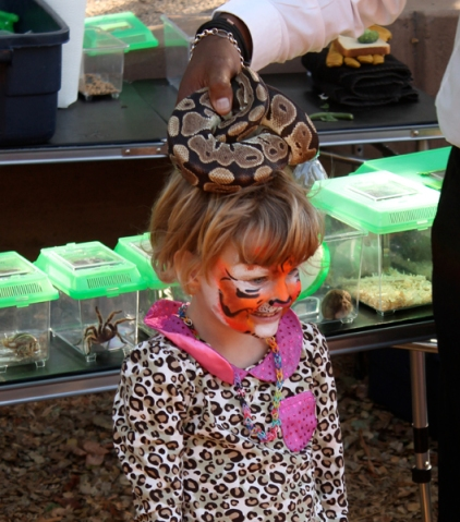 Snake at Tracy Hill's animal show, photo by Stacey Dennick