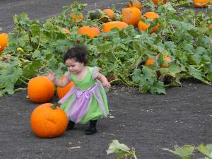 Petaluma Pumpkin Patch, photo by Stacey Dennick